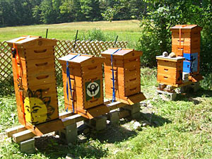 The Finson Farm includes an artisanal micro-apiary.